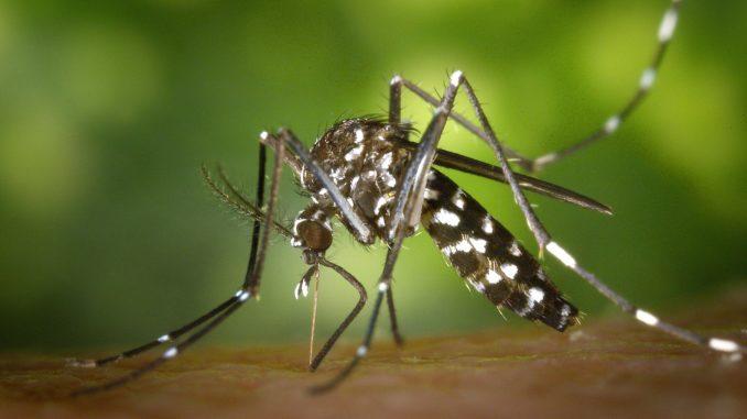 Mücken: Hausmittel gegen lästige Blutsauger