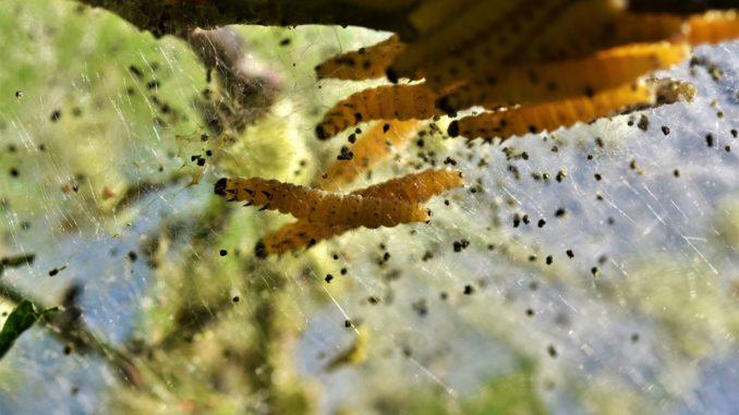 Vier Wege zur erfolgreichen Schädlingsbekämpfung