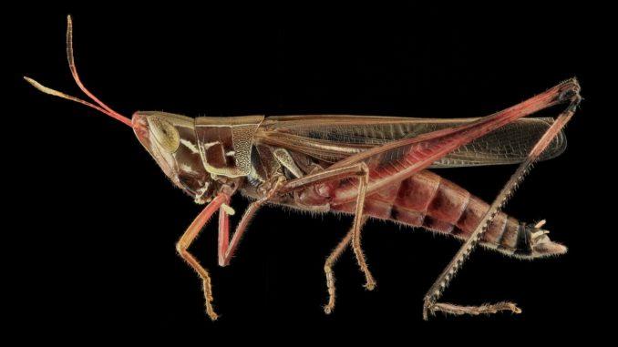 Schädlinge erfordern eine schnelle, professionelle Hilfe