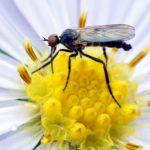 Den Standheizstrahler von Mücken und Motten befreien