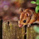 Ungeziefer im Garten wirkungsvoll bekämpfen