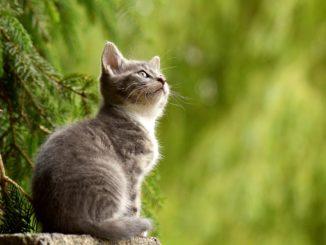 Katzenerziehung mit Katzenabwehrspray