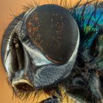 Haus- und Stechfliegen wirksam bekämpfen und vertreiben