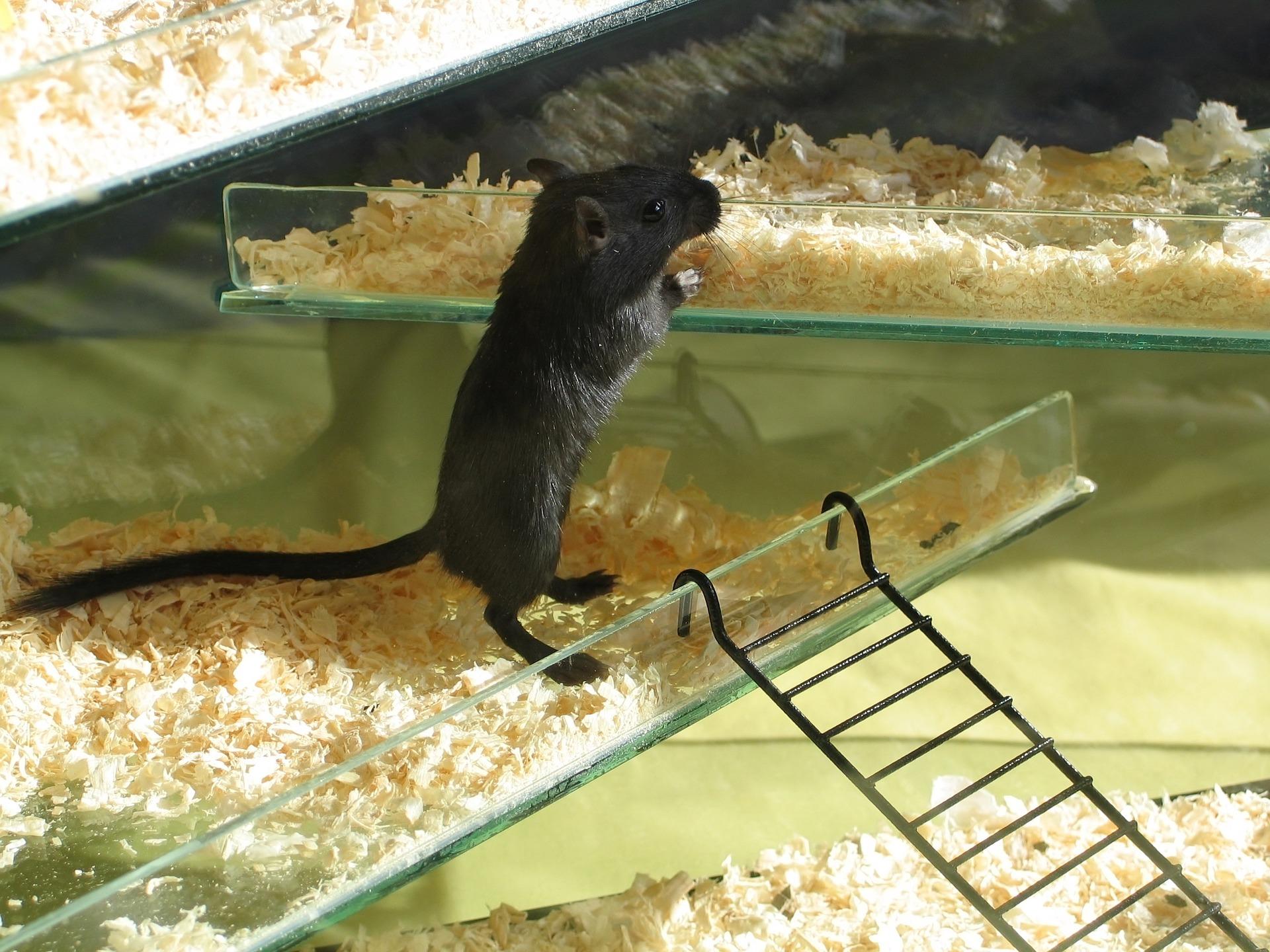 essig gegen mäuse