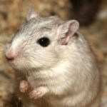 Essig gegen Mäuse - wir klären auf