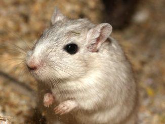hilft essig gegen mäuse